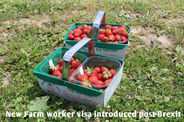 Farm worker visa